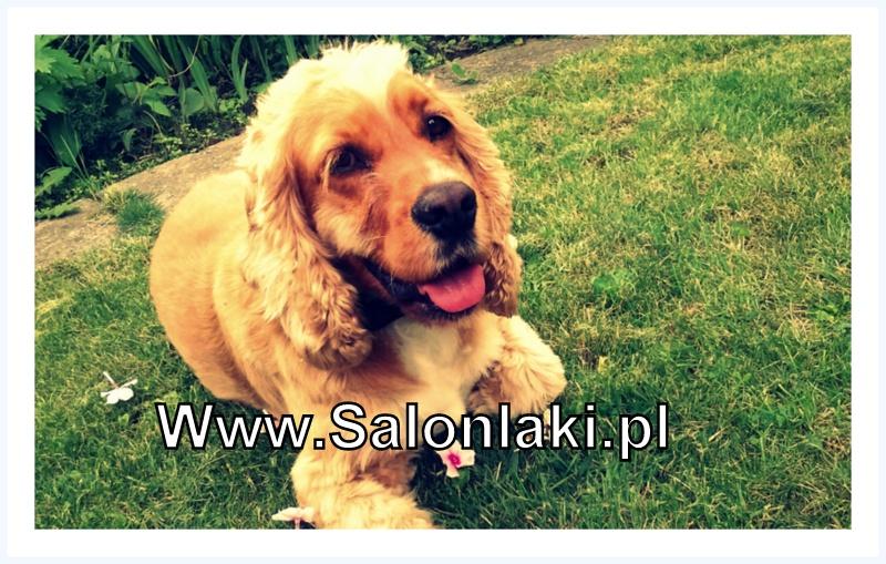www.salonlaki.pl
